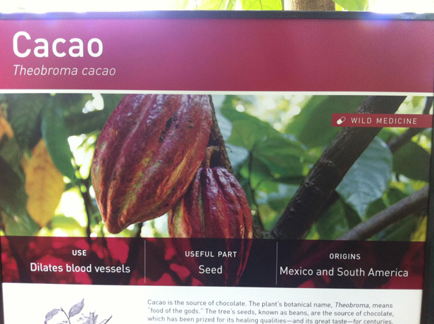 CacaoSign